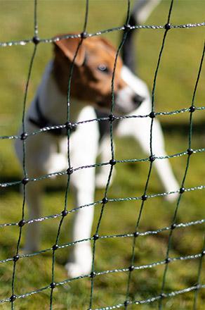 Filets de garde et de protection pour chiens