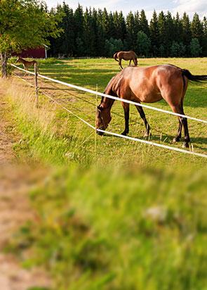 Kits complets de clôture pour chevaux