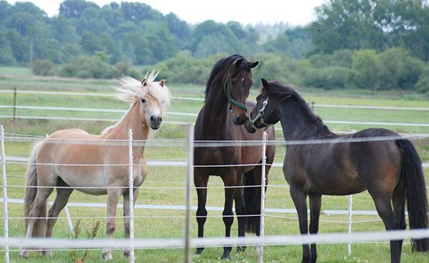 Notre gamme de clôtures pour chevaux